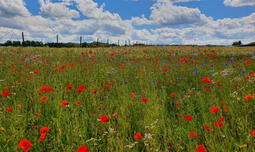 Blühwiesenpatenschaften für Insektenschutz in Erkelenz